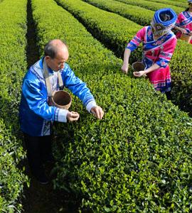 存茶和买老茶、新茶和老茶,它们的区别在哪?